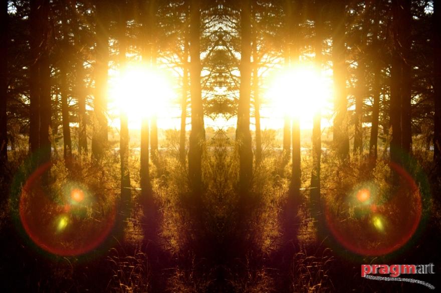 ojos-de-bosque