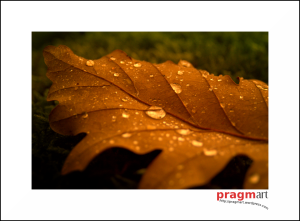 otoñalidades_por_pragmart_2009