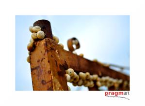 rutas_muertas_por_pragmart