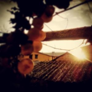 instragramadas_000:0001_pragmayama_2014_012