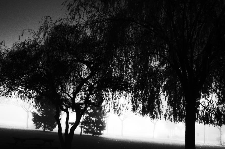 niebla_y_noche_pragmayama_2014_009