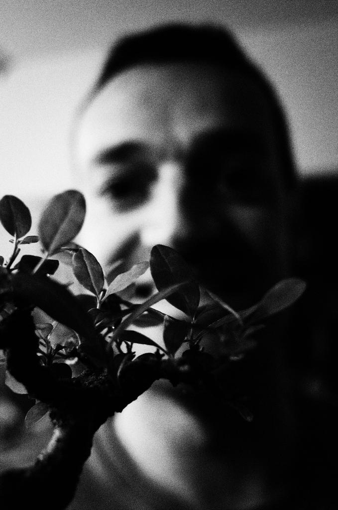 fer_bonsai_pragmart_2015_1024