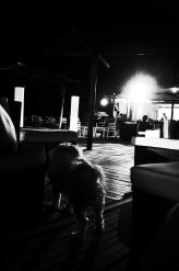costas_azules_72_pragmart_2017